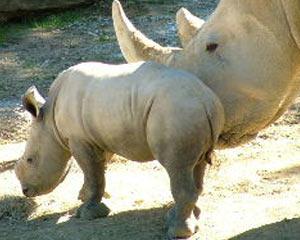 hamilton_zoo